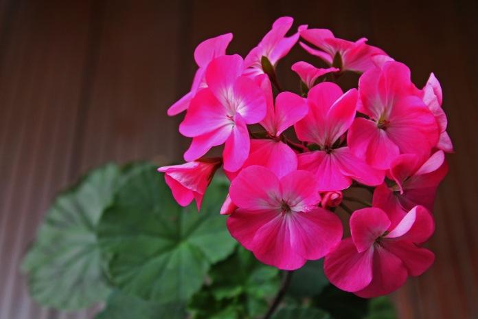 Nano Pink1
