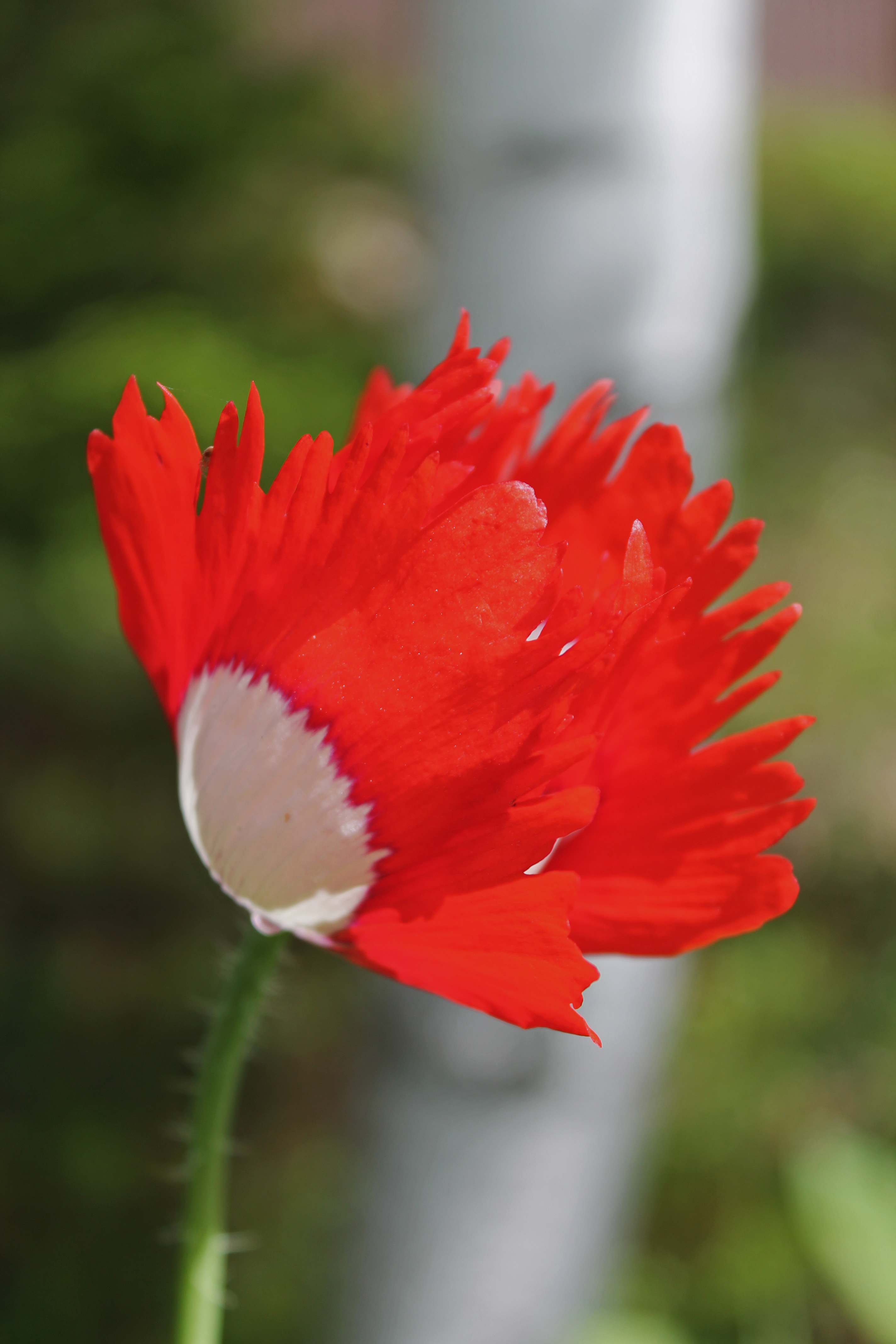 Danish Flag 2